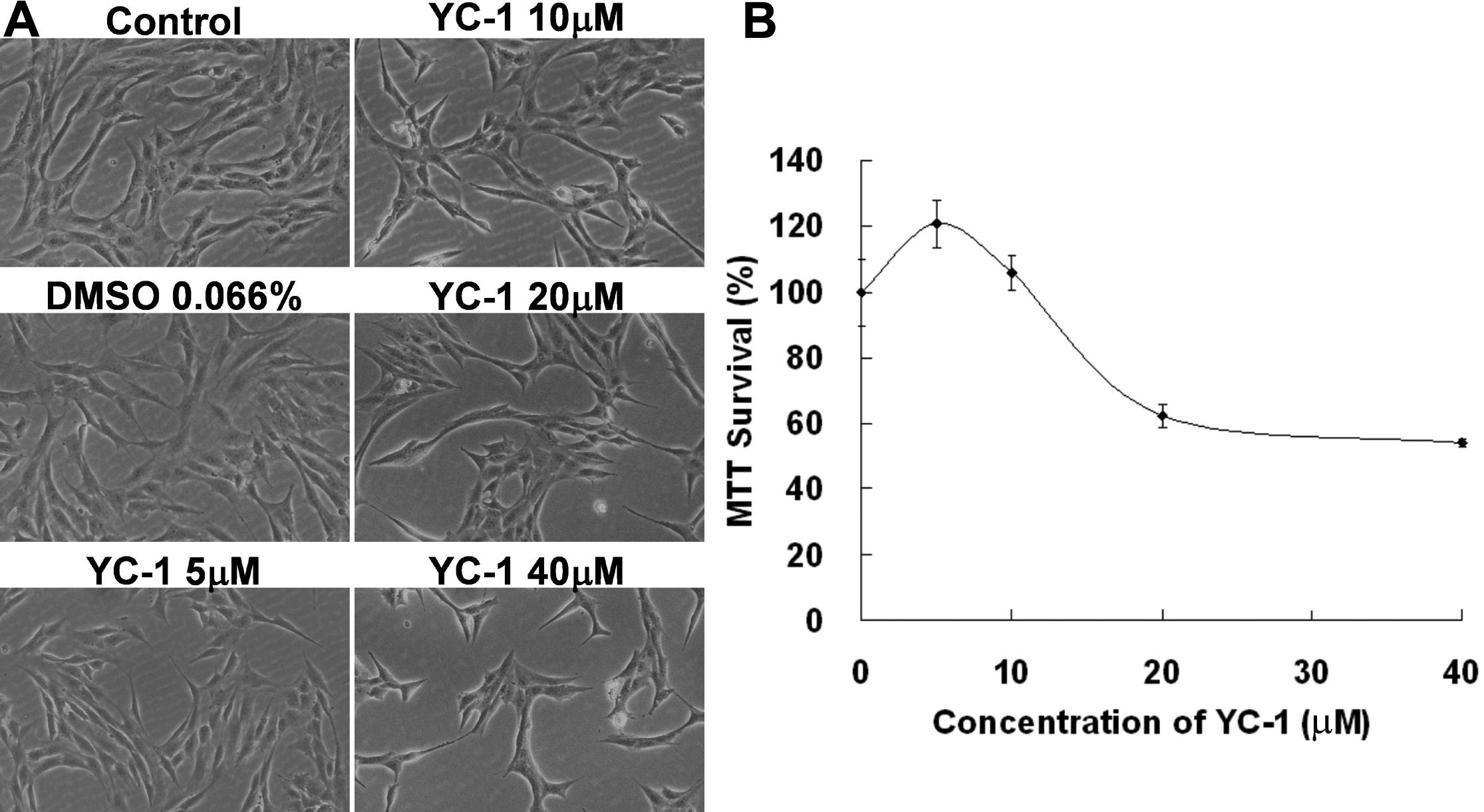 Molecular Vision: Tsui, Mol Vis 2012