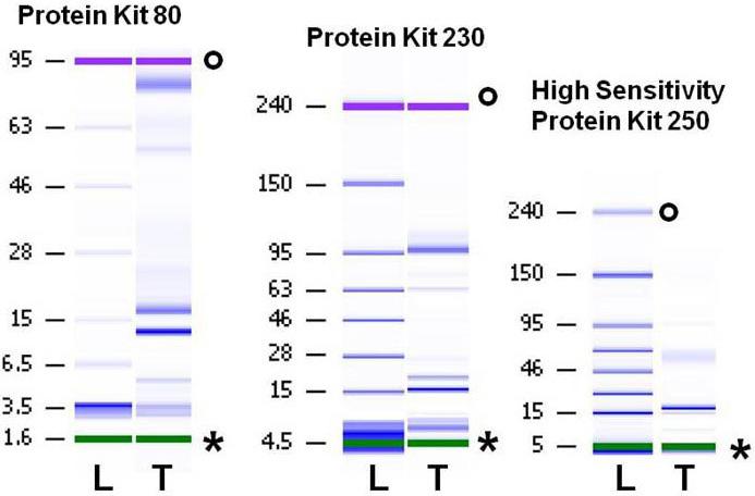 Molecular Vision Versura Mol Vis 2012 182526 2537 Figure 1